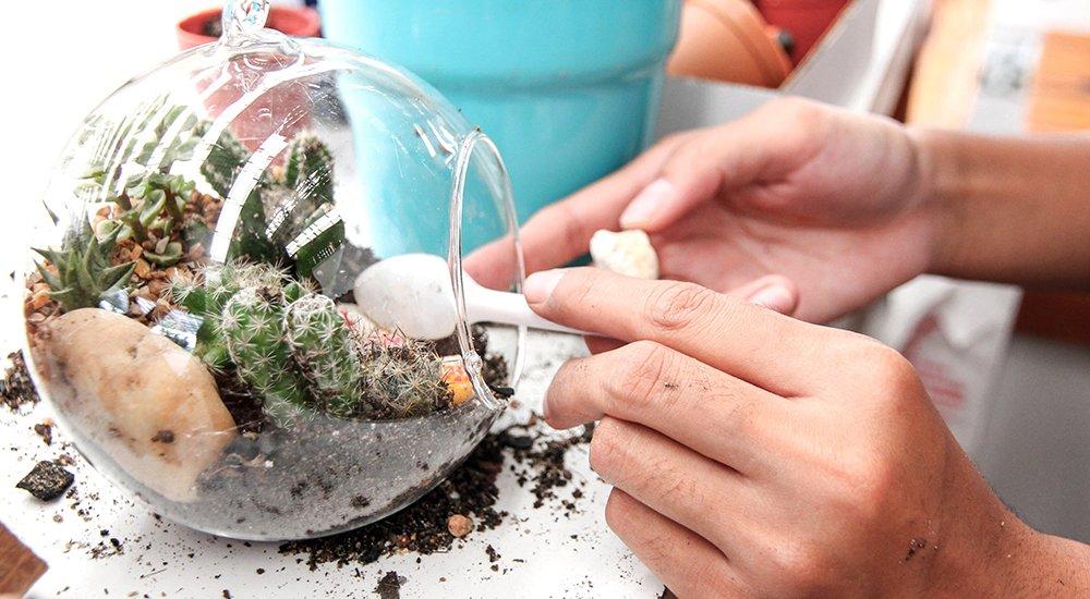 DIY sukkulent terrarium
